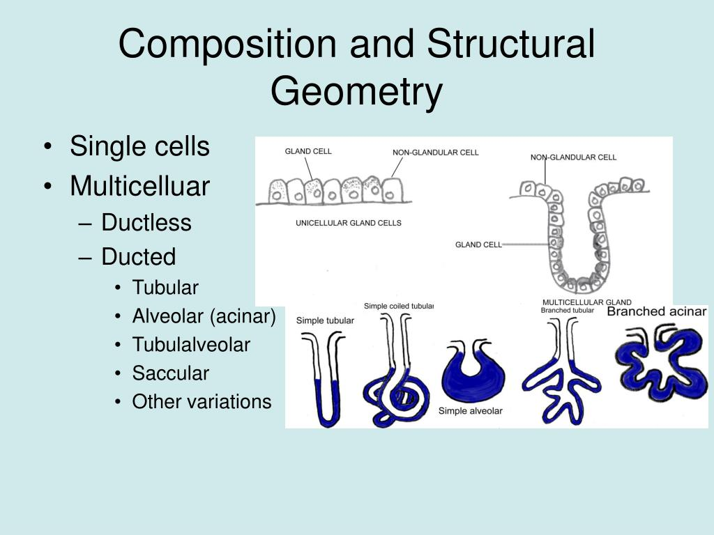Composition and Structural Geometry