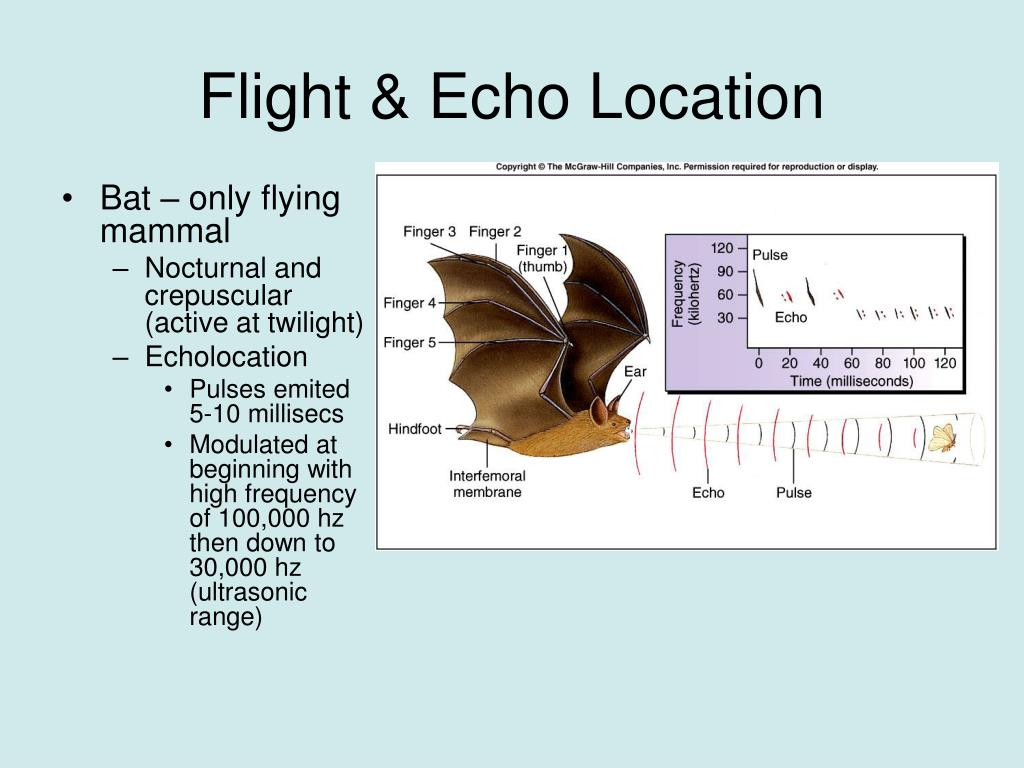Flight & Echo Location