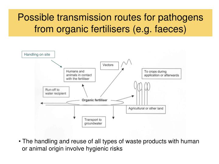 Possible transmission routes for pathogens from organic fertilisers (e.g. faeces)