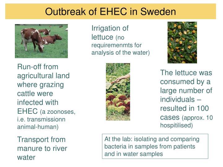 Outbreak of EHEC in Sweden