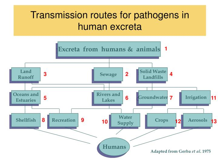 Excreta  from  humans &  animals
