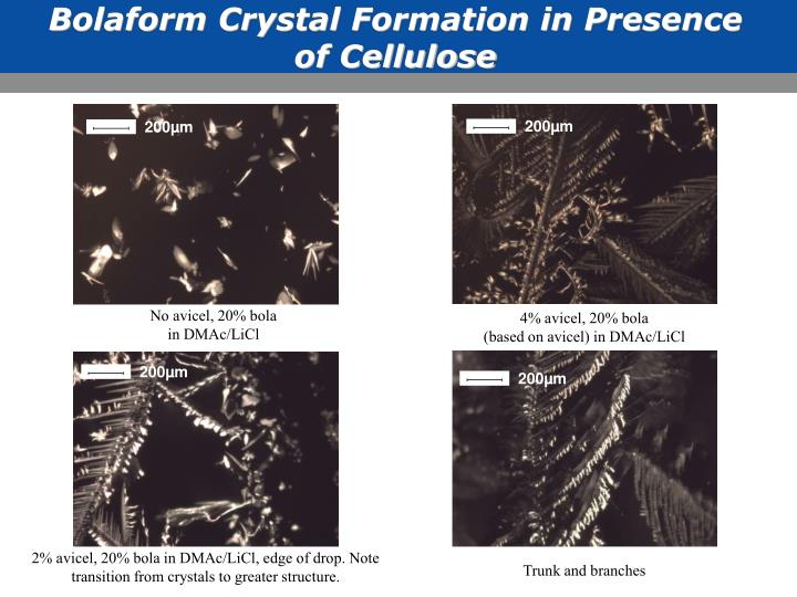Bolaform Crystal Formation in Presence of Cellulose