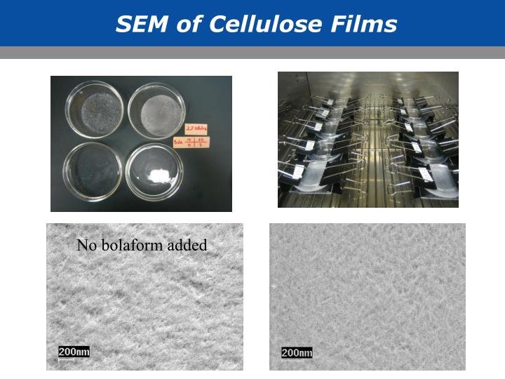SEM of Cellulose Films