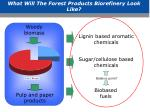 what will the forest products biorefinery look like1