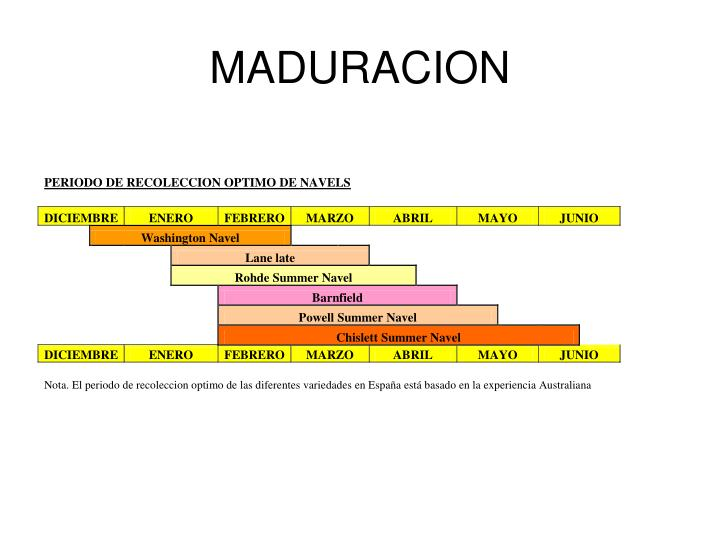 MADURACION