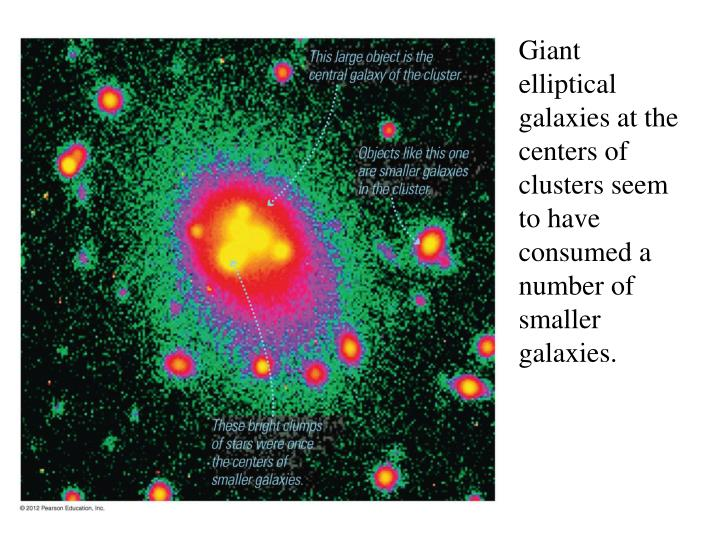 Giant elliptical galaxies at the centers of clusters seem to have consumed a number of smaller galaxies.