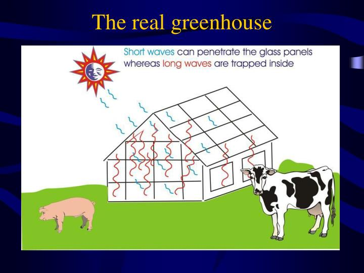 The real greenhouse