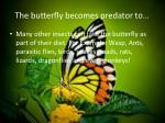 the butterfly becomes predator to