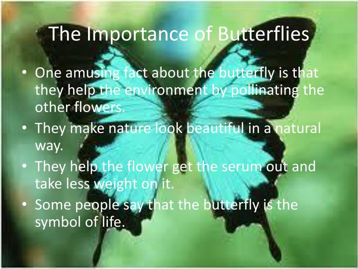 The importance of butterflies