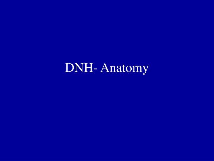 DNH- Anatomy