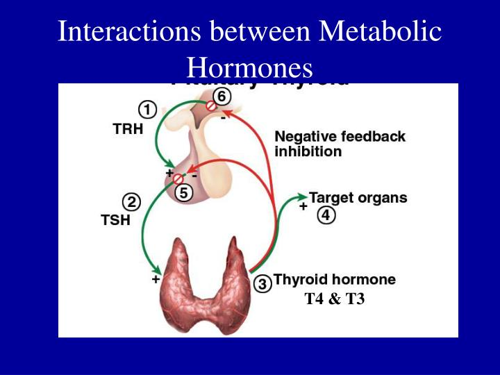 Interactions between Metabolic Hormones
