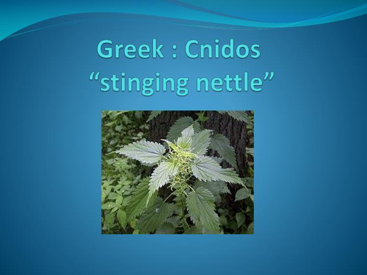 Greek cnidos stinging nettle