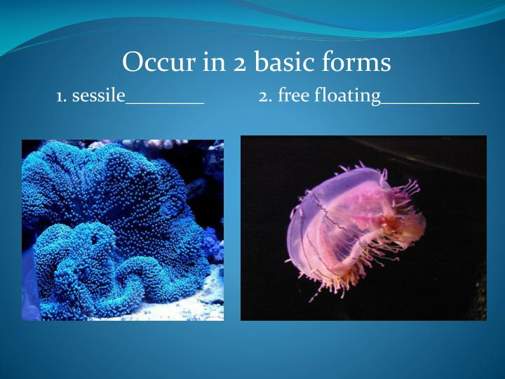 Occur in 2 basic forms