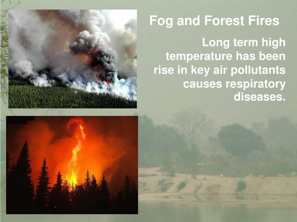 Fog and Forest Fires