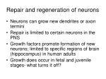 repair and regeneration of neurons