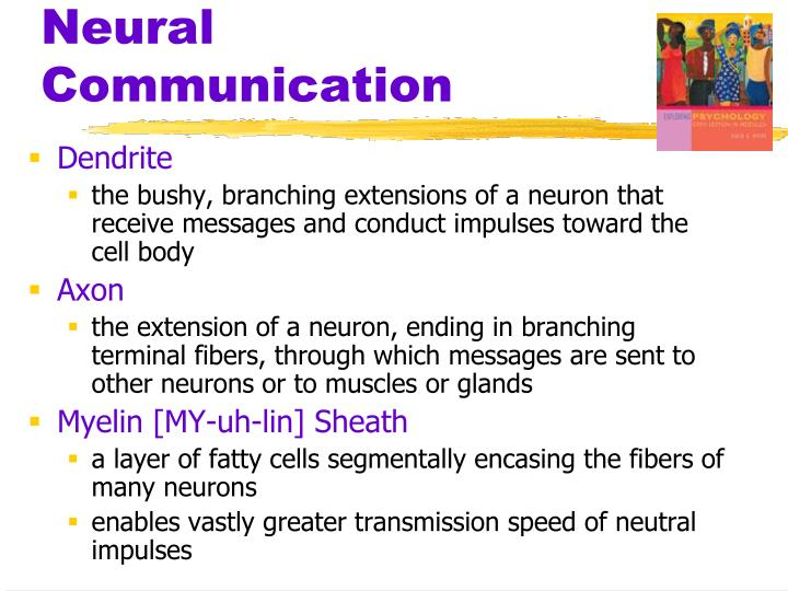 Neural communication1