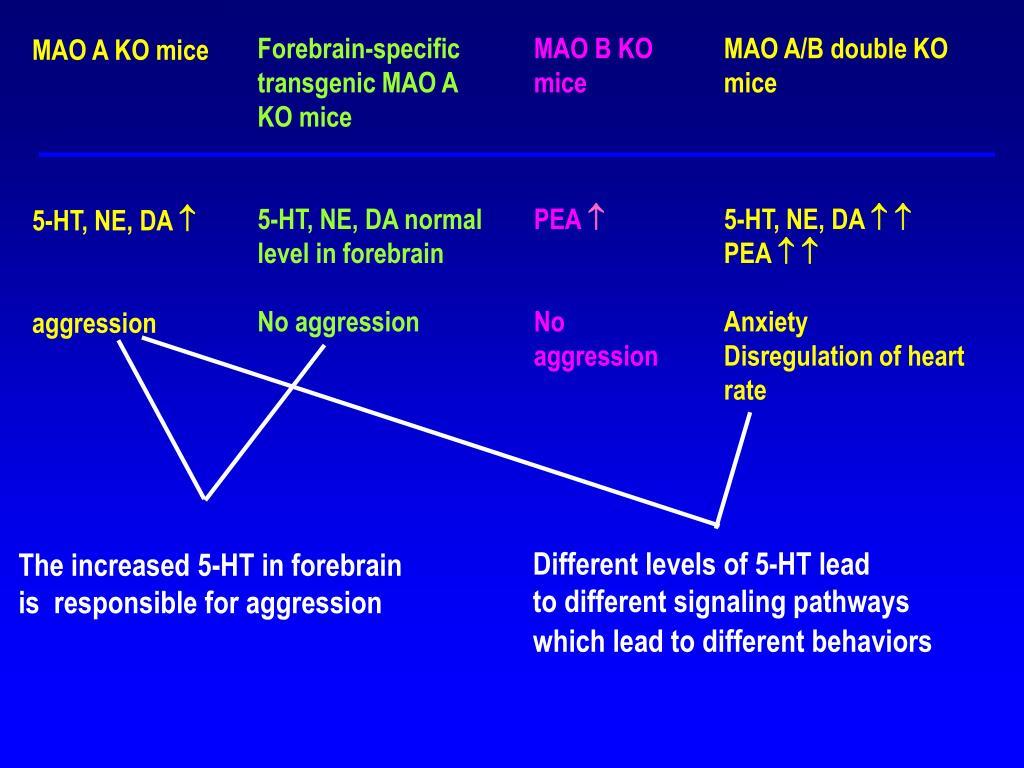 Forebrain-specific transgenic MAO A KO mice
