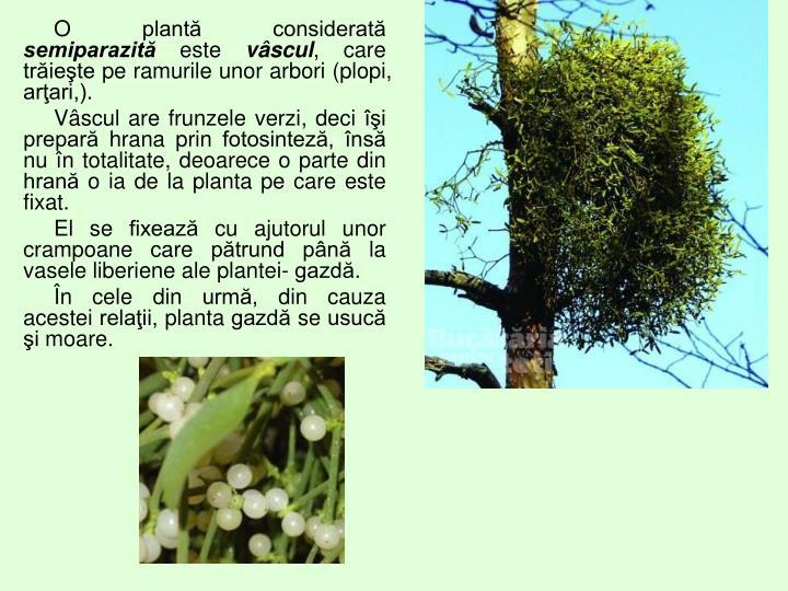 O plantă considerată