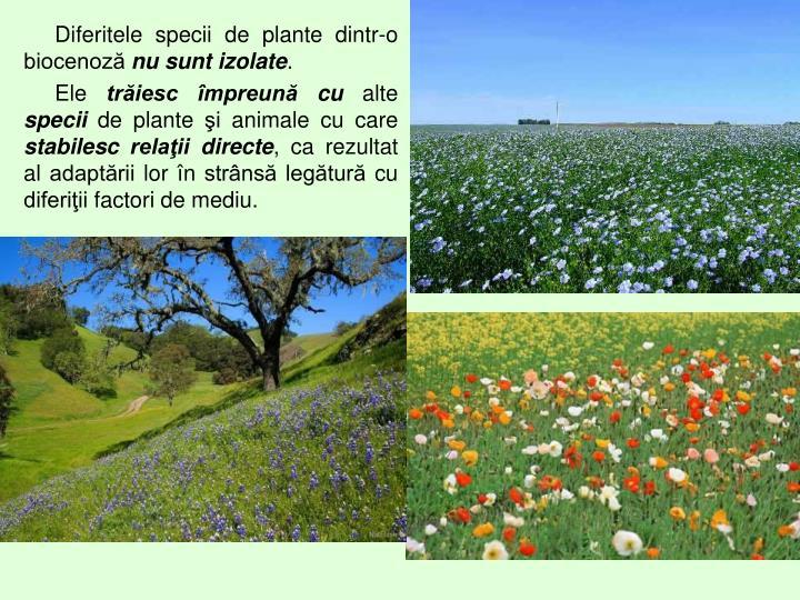 Diferitele specii de plante dintr-o biocenoză