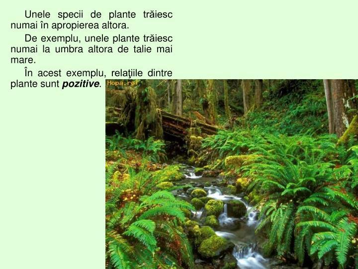 Unele specii de plante trăiesc numai în apropierea altora.