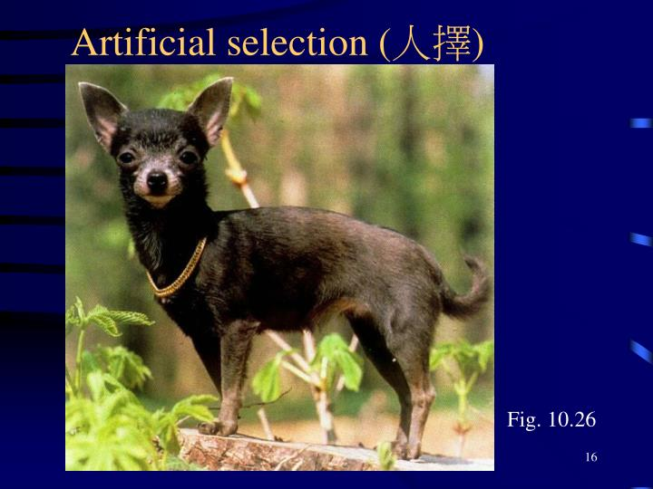 Artificial selection (