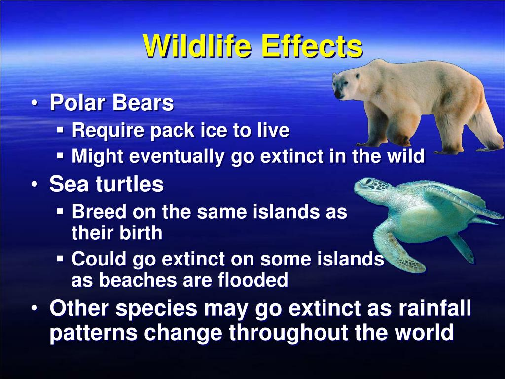 Wildlife Effects