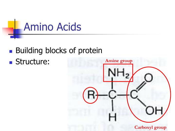 Building blocks of protein