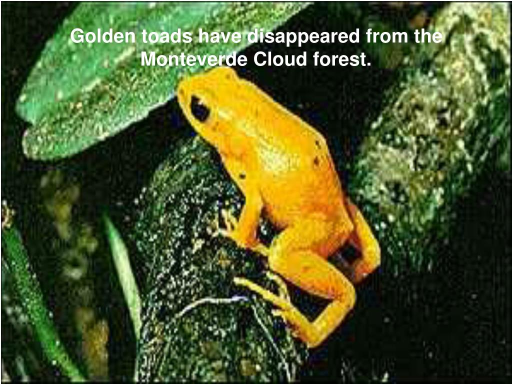 Golden toads have disappeared from the Monteverde Cloud forest.