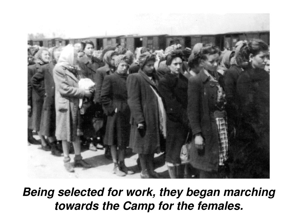 Being selected for work, they began marching towards the Camp for the females.