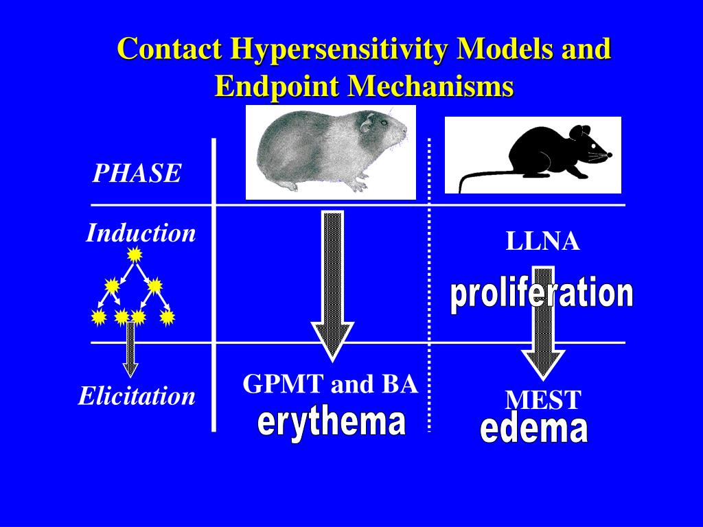 Contact Hypersensitivity Models and Endpoint Mechanisms