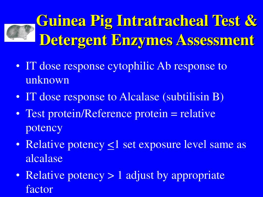 Guinea Pig Intratracheal Test & Detergent Enzymes Assessment