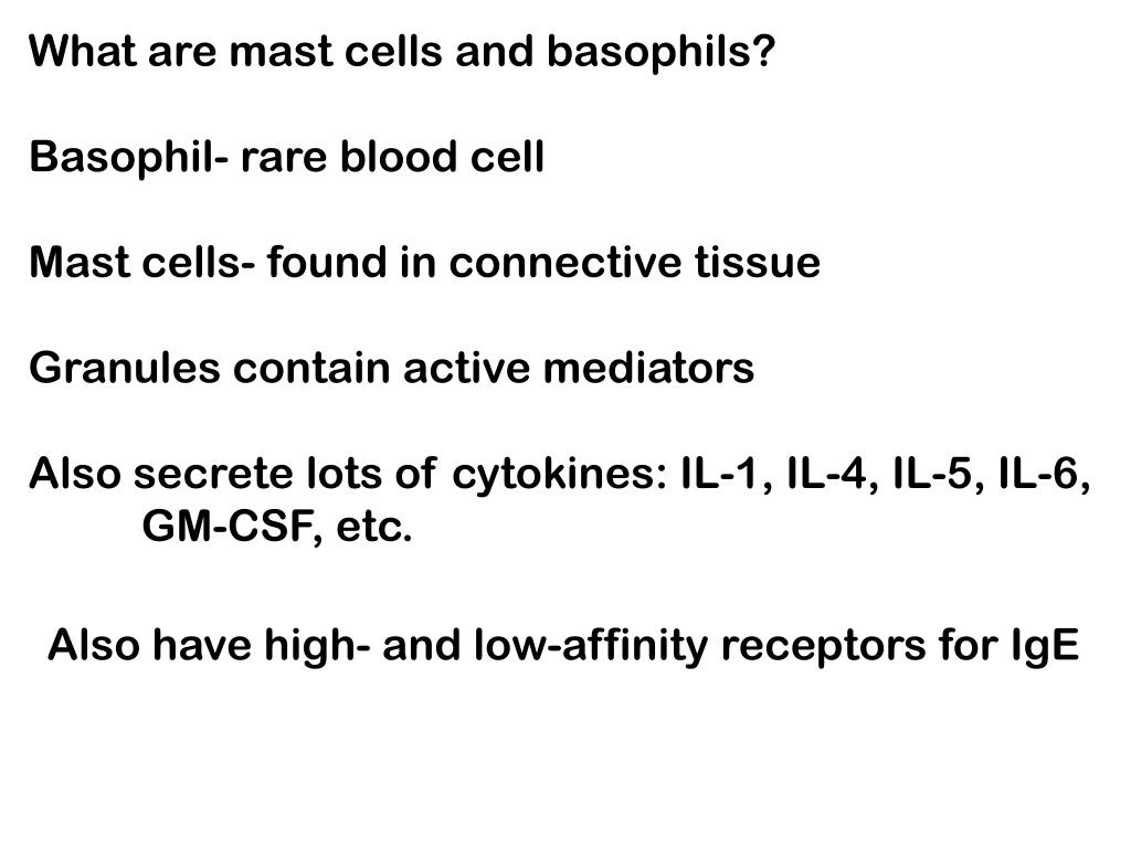 What are mast cells and basophils?