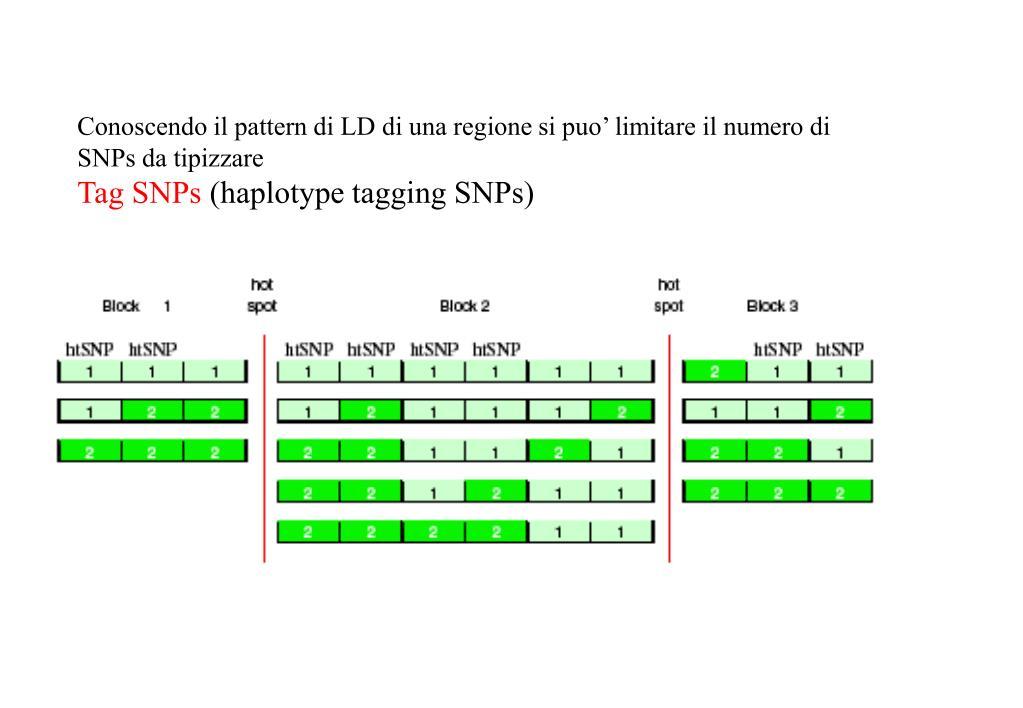Conoscendo il pattern di LD di una regione si puo' limitare il numero di SNPs da tipizzare