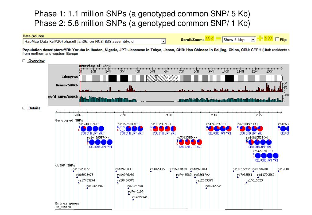 Phase 1: 1.1 million SNPs (a genotyped common SNP/ 5 Kb)