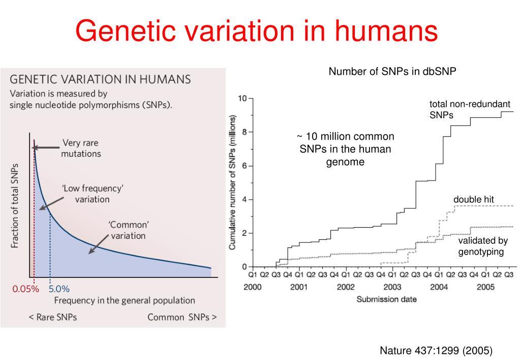 Genetic variation in humans