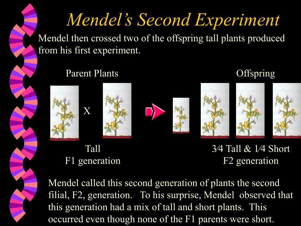 Mendel's Second Experiment