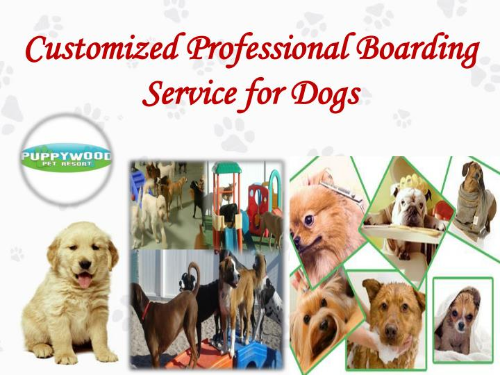 Customized professional boarding service for dogs