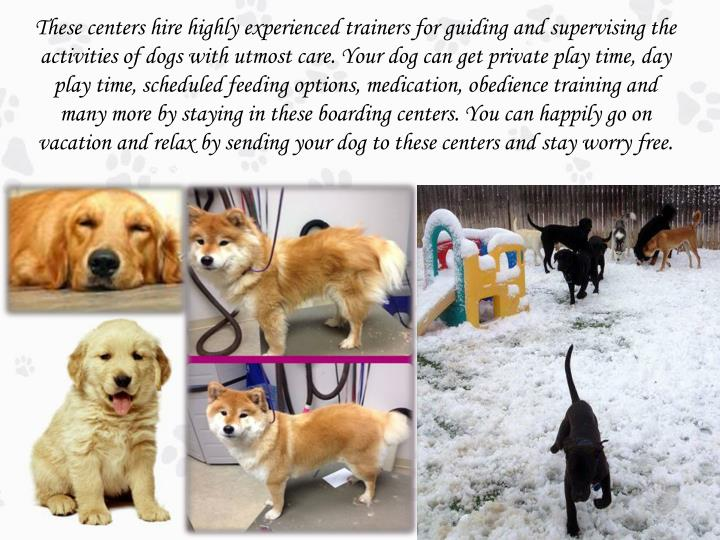 These centers hire highly experienced trainers for guiding and supervising the activities of dogs with utmost care. Your dog can get private play time, day play time, scheduled feeding options, medication, obedience training and many more by staying in these boarding centers. You can happily go on vacation and relax by sending your dog to these centers and stay worry free.