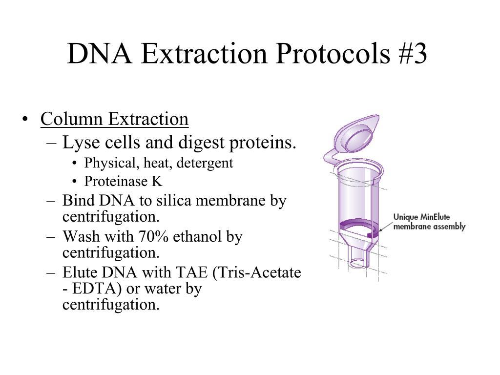 DNA Extraction Protocols #3