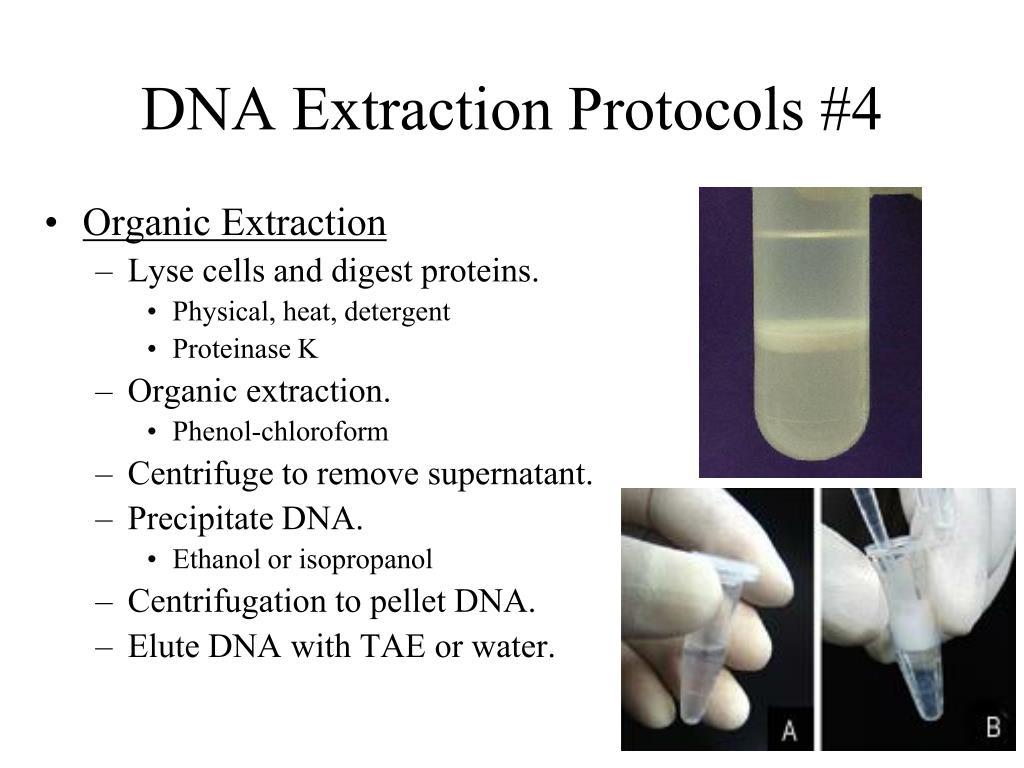 DNA Extraction Protocols #4