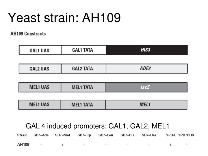 Yeast strain: AH109