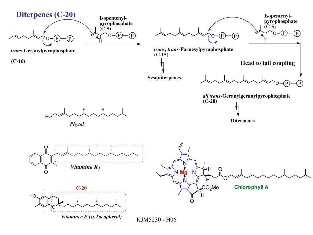 Diterpenes (C-20)