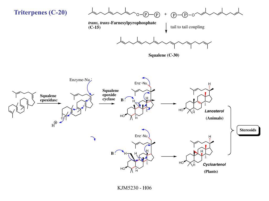 Triterpenes (C-20)