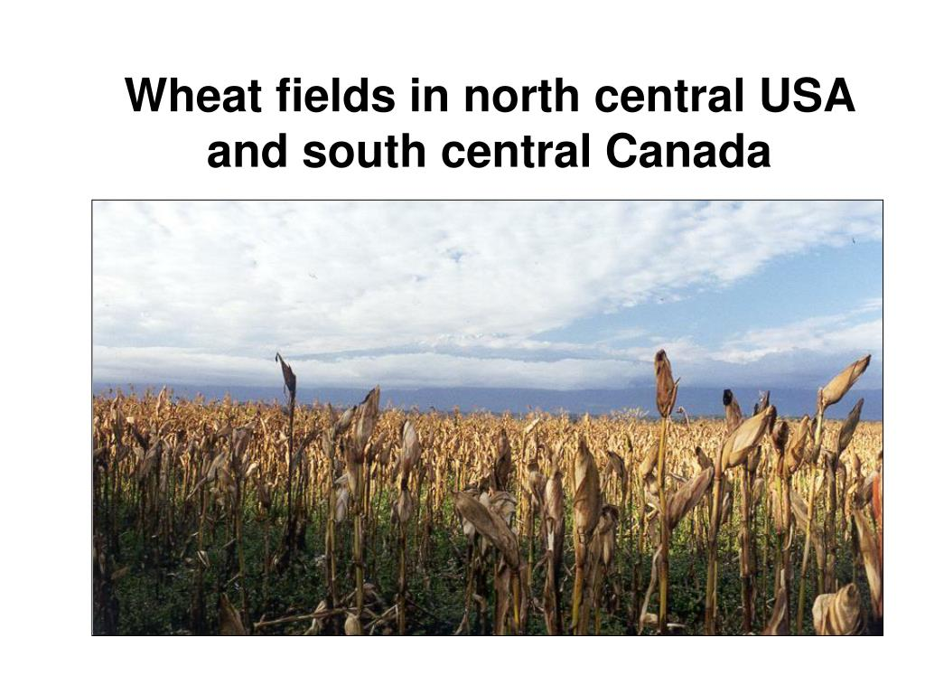 Wheat fields in north central USA and south central Canada