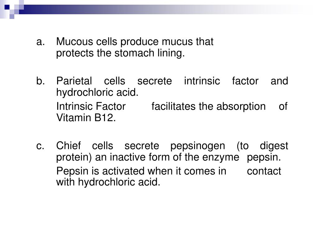 a.Mucous cells produce mucus that protects the stomach lining.