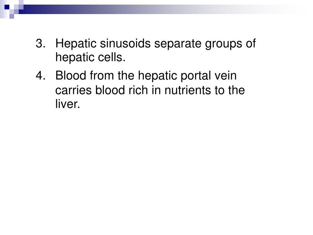 3.Hepatic sinusoids separate groups of hepatic cells.