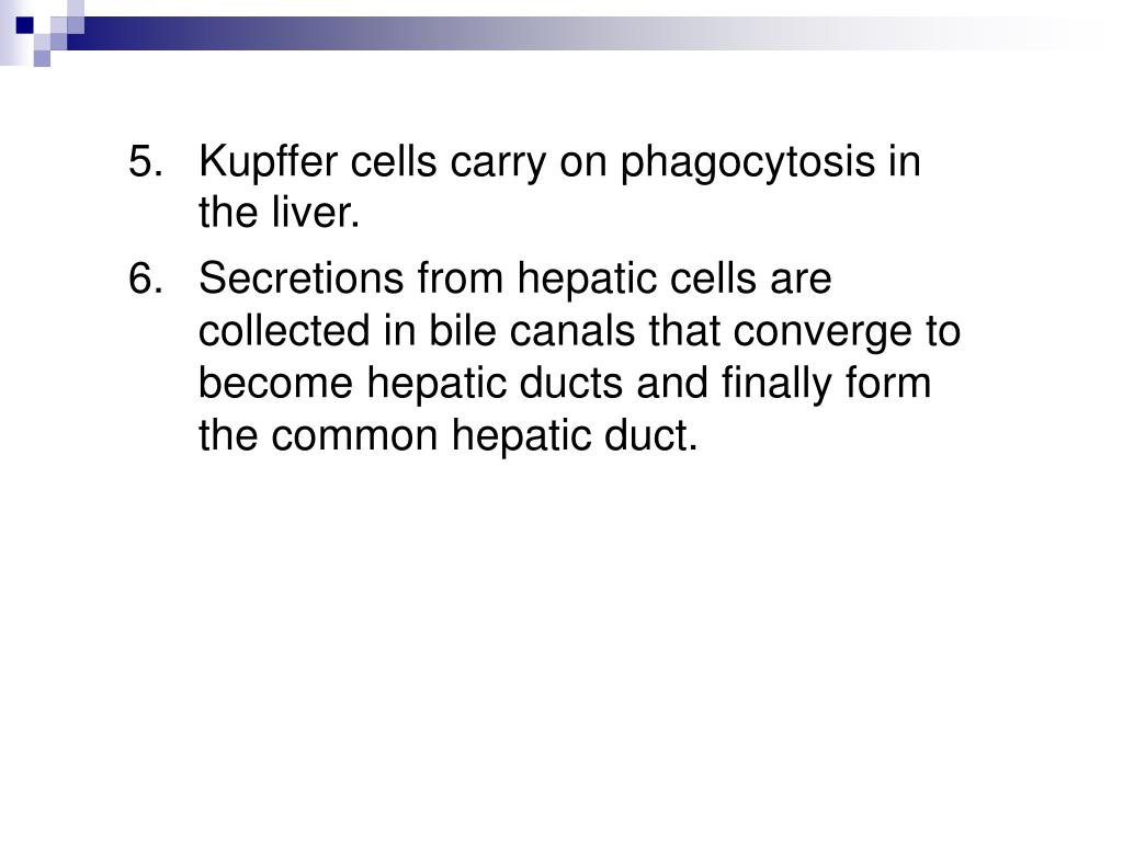 5.Kupffer cells carry on phagocytosis in the liver.