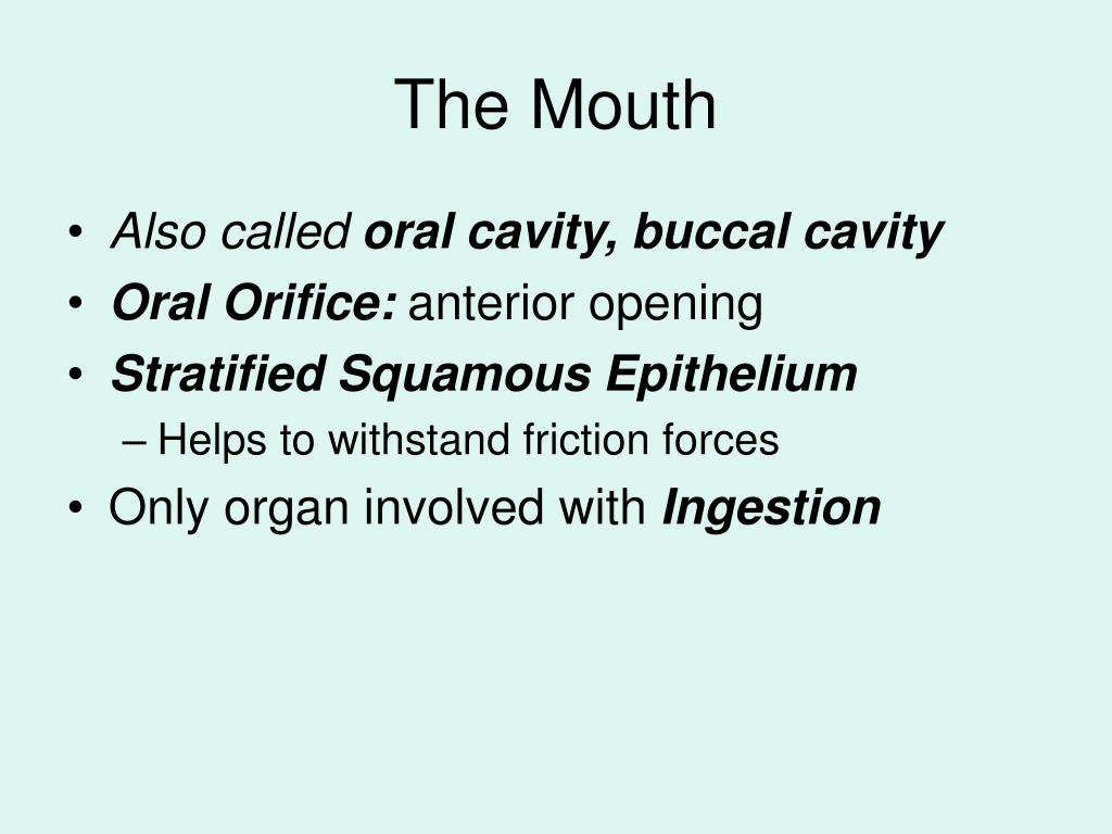 The Mouth