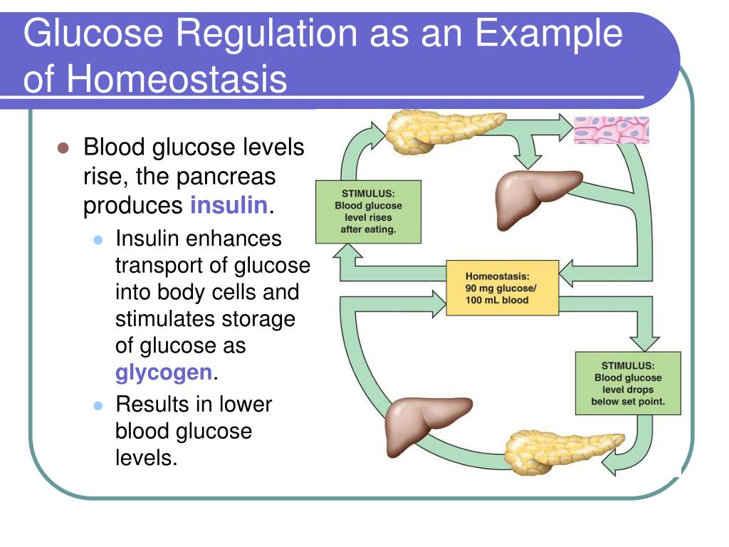 Glucose Regulation as an Example of Homeostasis