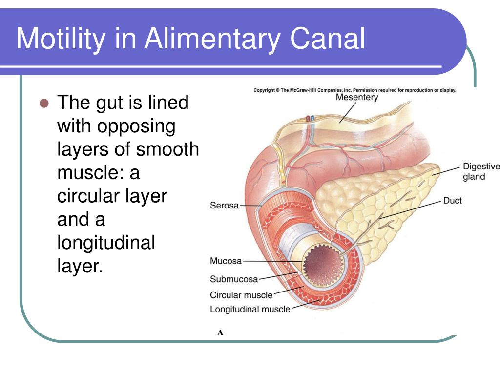 Motility in Alimentary Canal